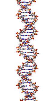ADN_helice_01