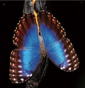2-9_mariposas_sucuenca_lacantun