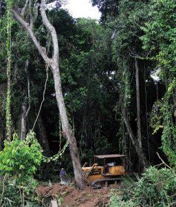 4-1_deforestacion_mcomillas