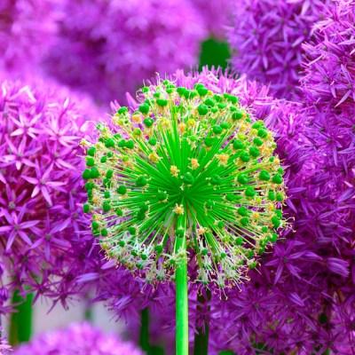 Mandalas em Flores 01