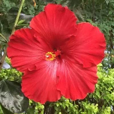 Mandalas em Flores 15