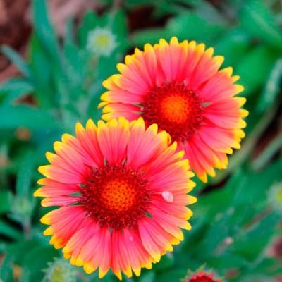 Mandalas em Flores 02