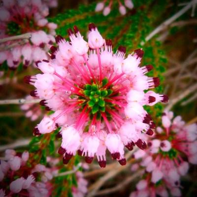 Mandalas em Flores 05