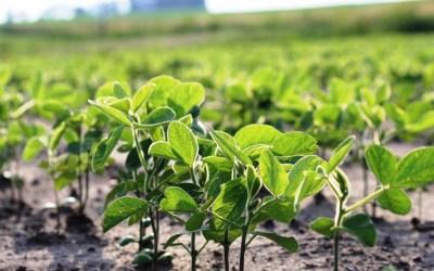 ¿Qué hay detrás de la baja del precio de la soja?