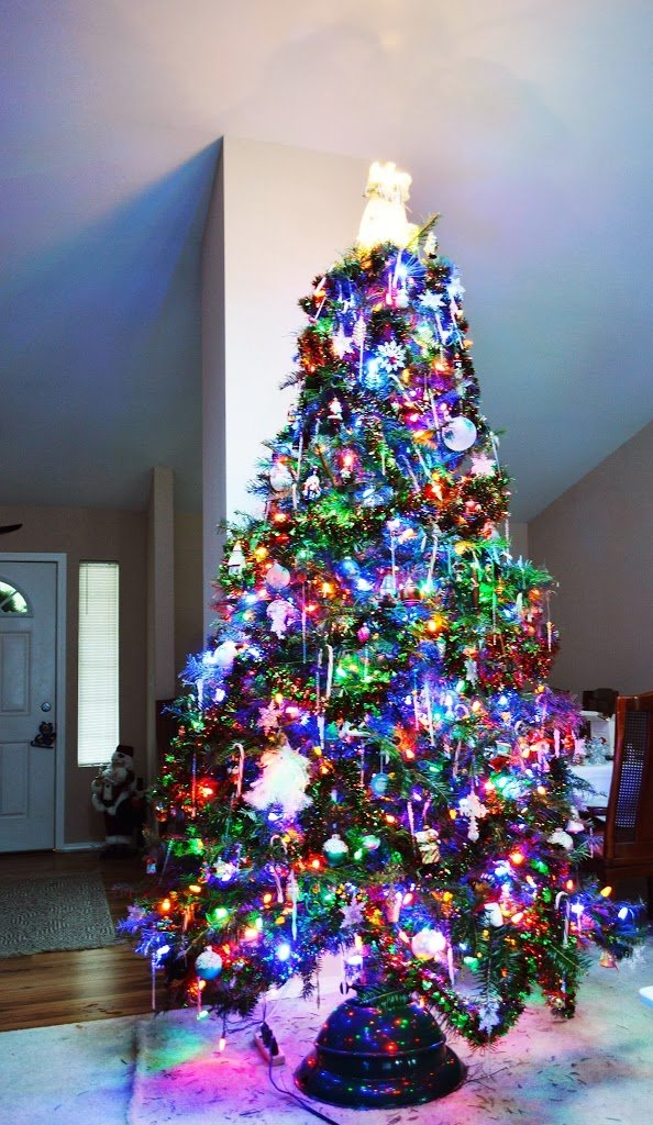 We All Love Our Christmas Trees . . . But Where Did This Tradition ...