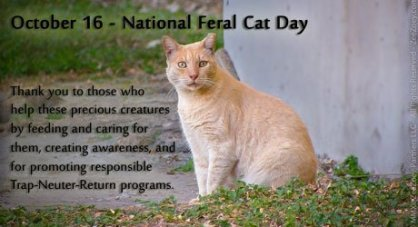 Feral-cat-day-2013