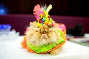 gaudy cat