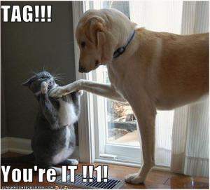 lol-tag-dog-and-cat
