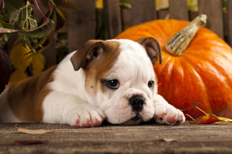 Tips To Keep Your Dog Safe On Halloween