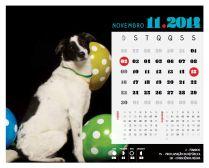 Che-Novembro2014-2