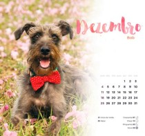 Dezembro_Bob2