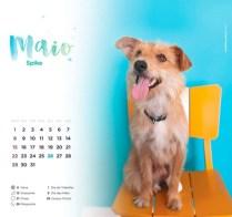 Maio_Spike2