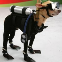 Epic Pet Costume: Scuba Dog