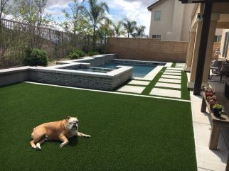 dog resting on backyard artificial grass lawn