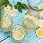 Champagne des fées: boisson naturelle à base de fleurs de sureau noir