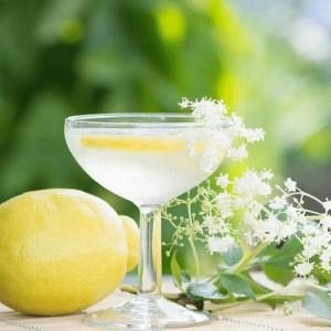Champagne des fées: boisson naturelle fermentée à base de fleurs de sureau noir. Recette facile
