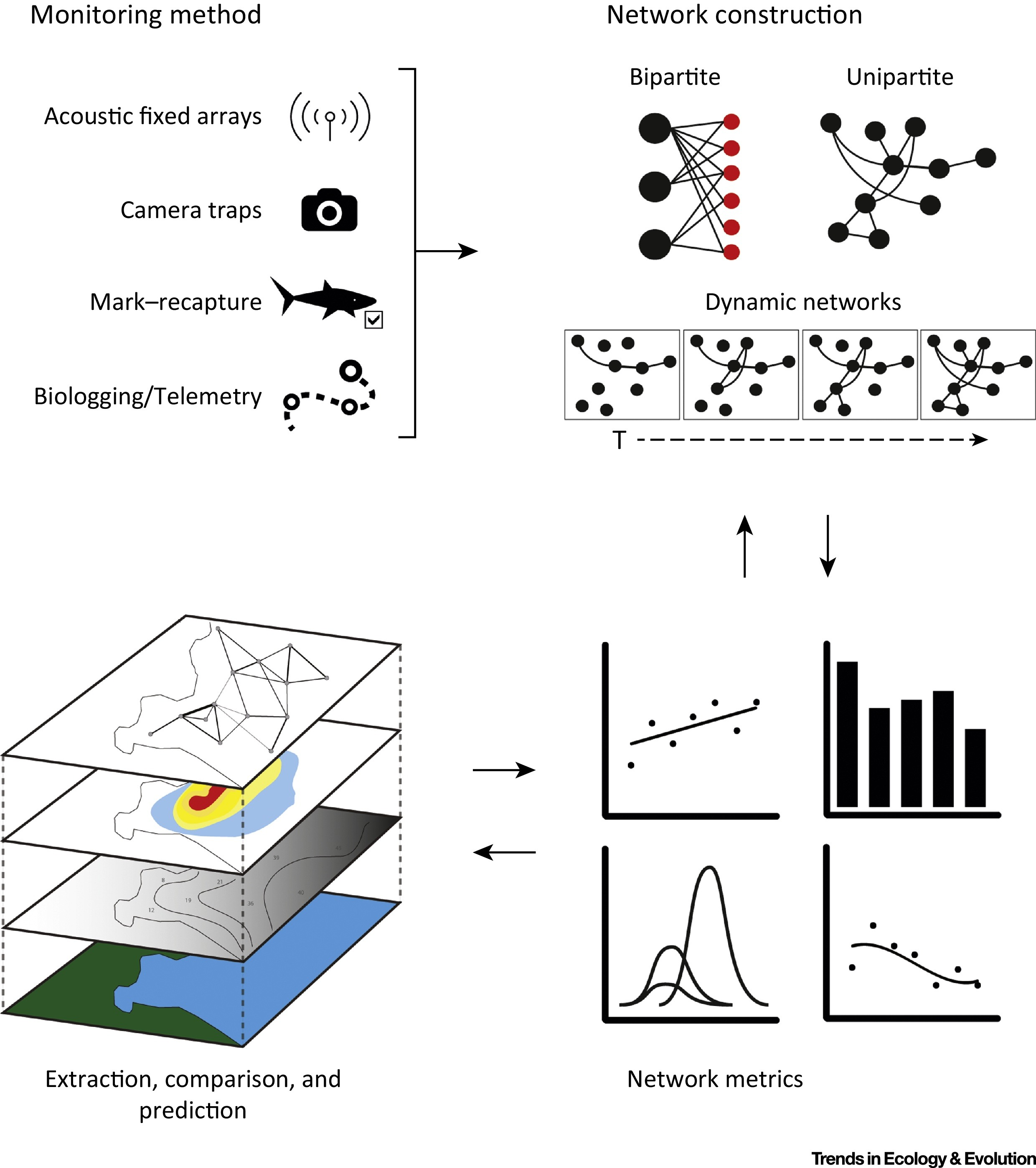 Emerging Network Based Tools In Movement Ecology Trends
