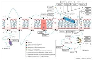 Current pharmacogenomic studies on hERG potassium channels: Trends in Molecular Medicine