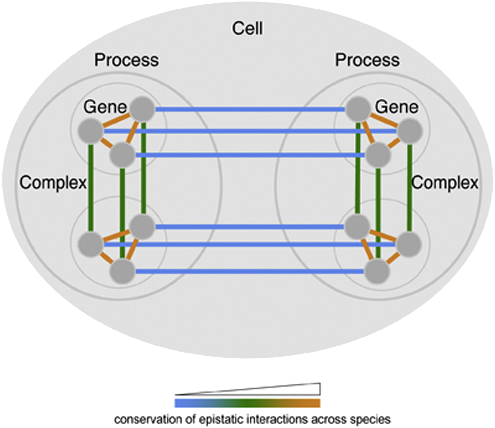 Hierarchical Modularity And The Evolution Of Genetic Interactomes Across Species Molecular Cell