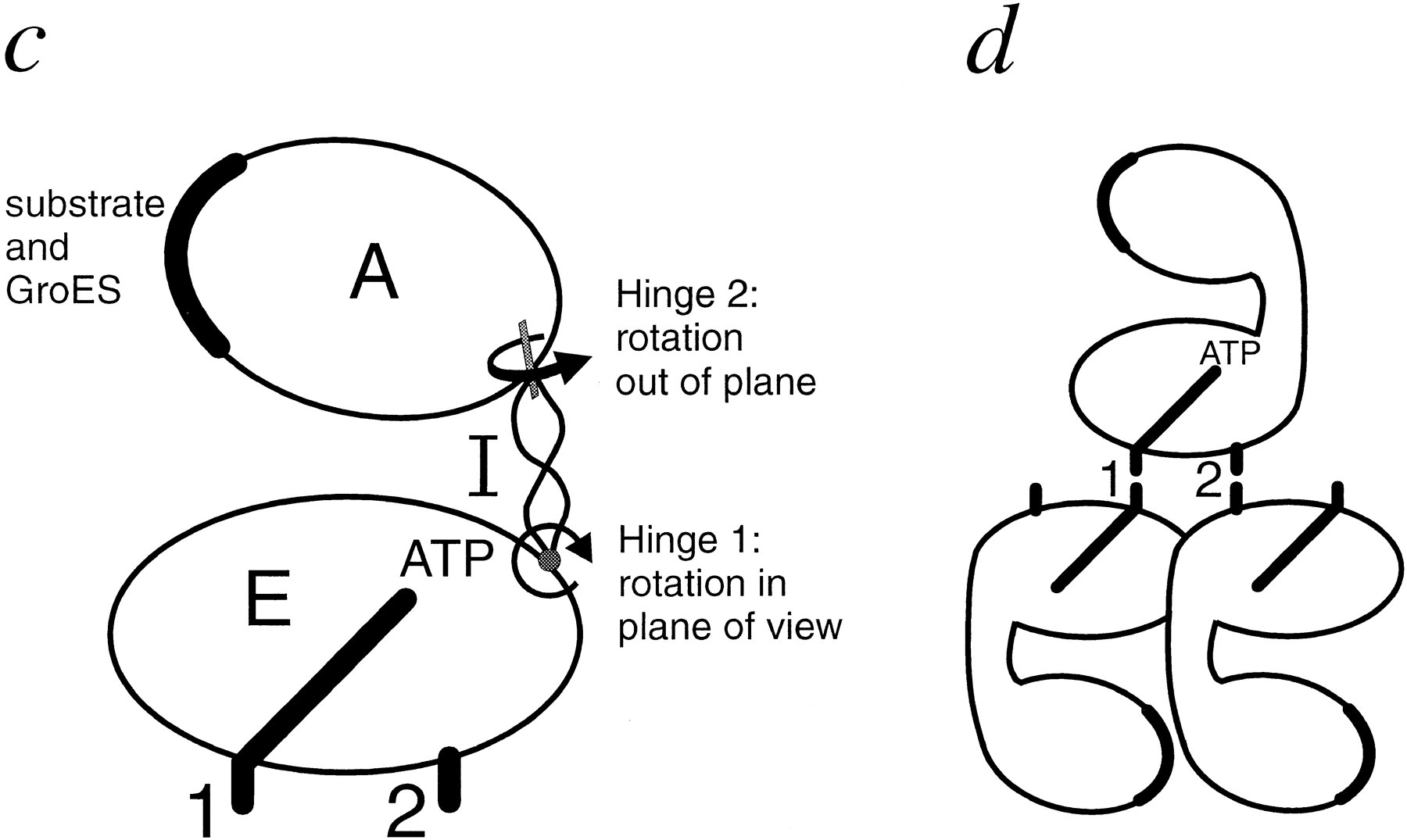 The Chaperonin Atpase Cycle Mechanism Of Allosteric