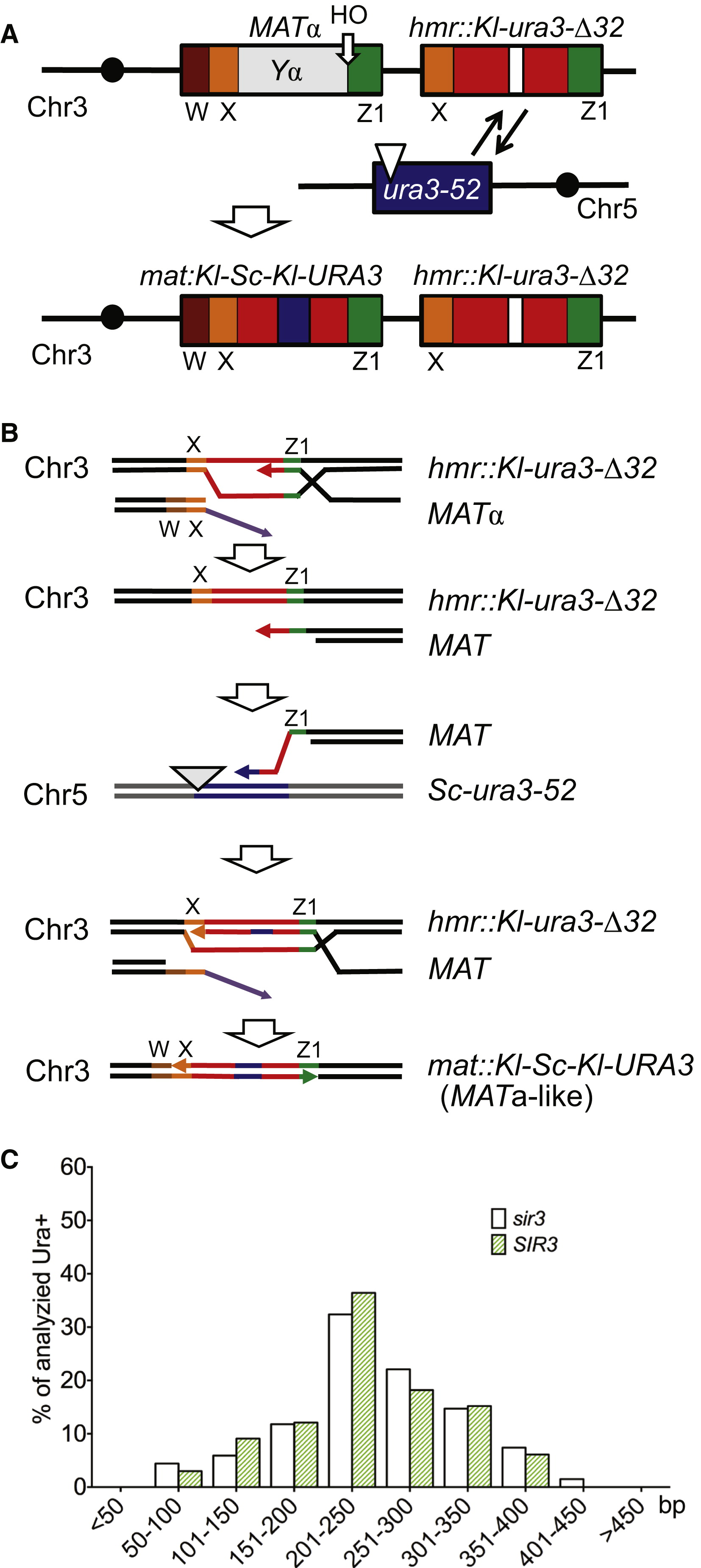 Frequent Interchromosomal Template Switches During Gene