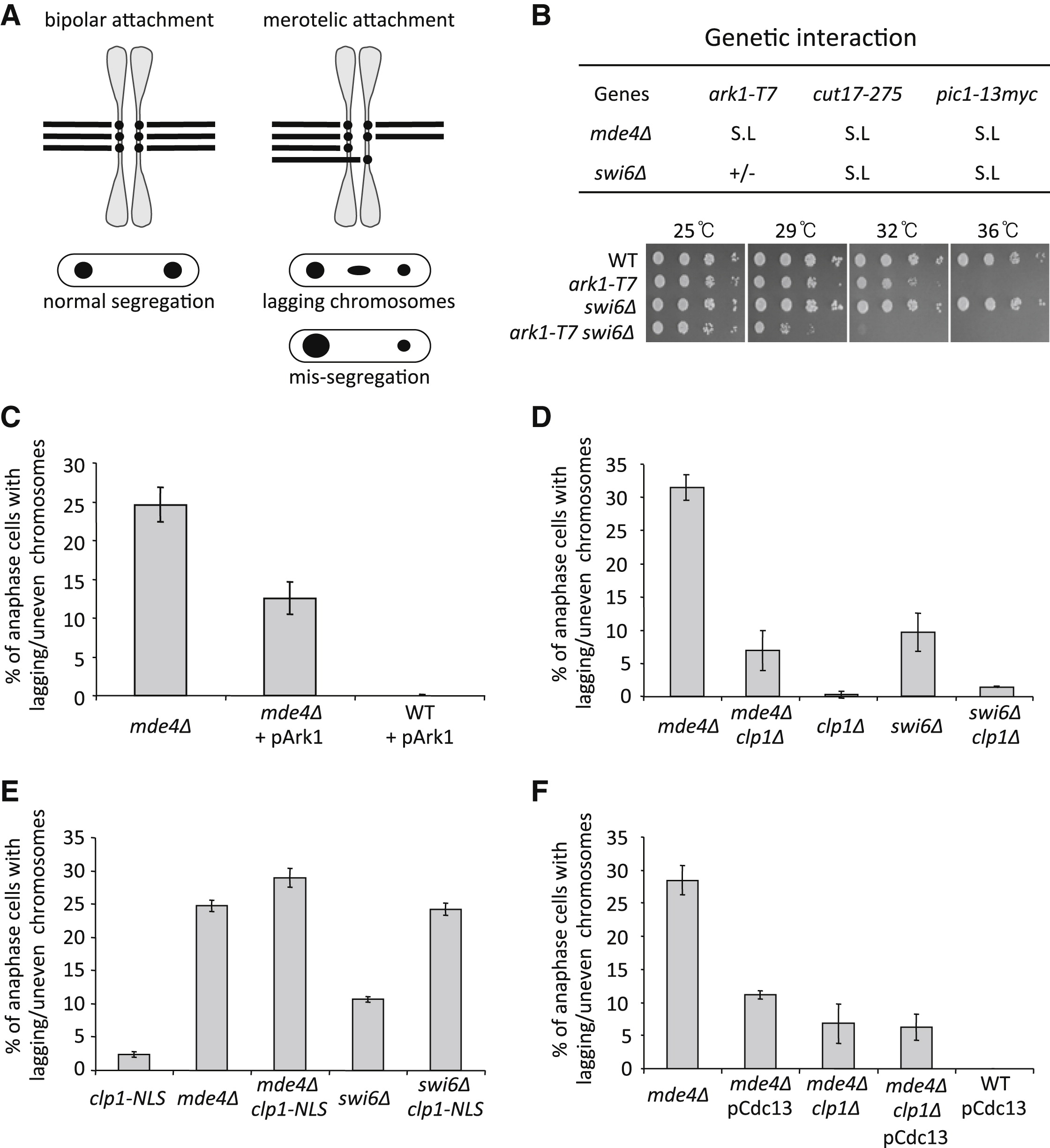 A Role For Metaphase Spindle Elongation Forces In