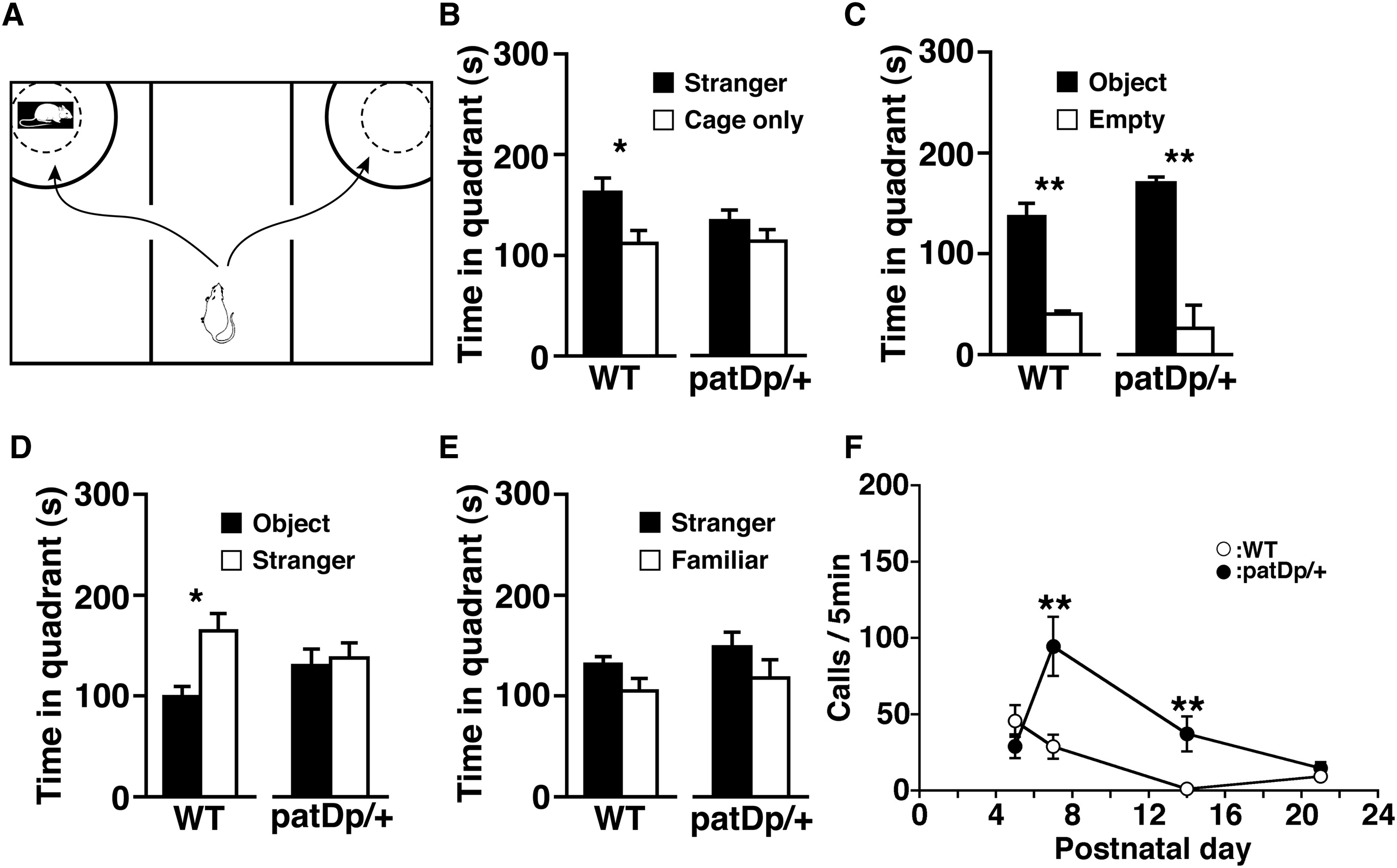 Abnormal Behavior In A Chromosome Engineered Mouse Model