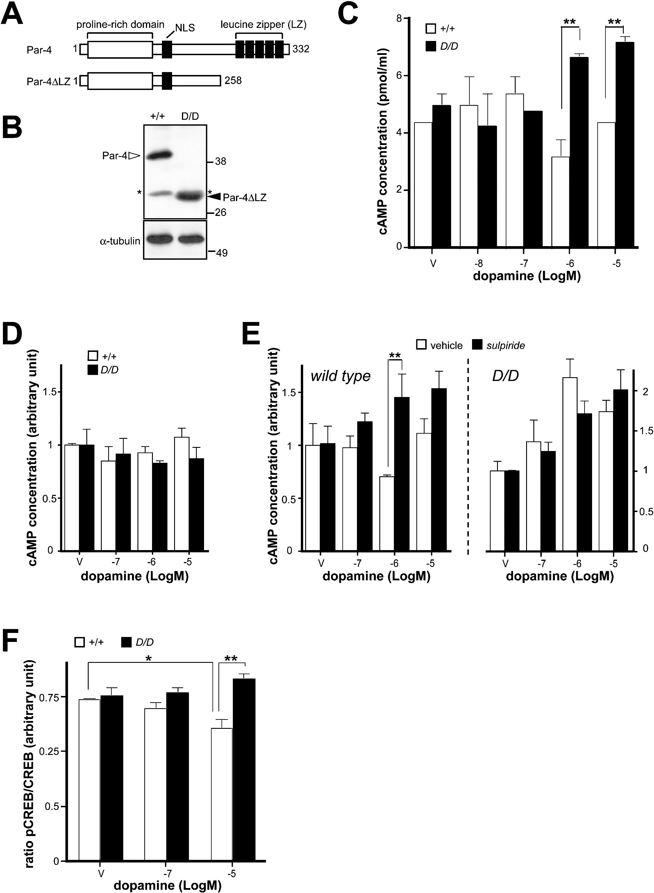 Par 4 Links Dopamine Signaling And Depression Cell