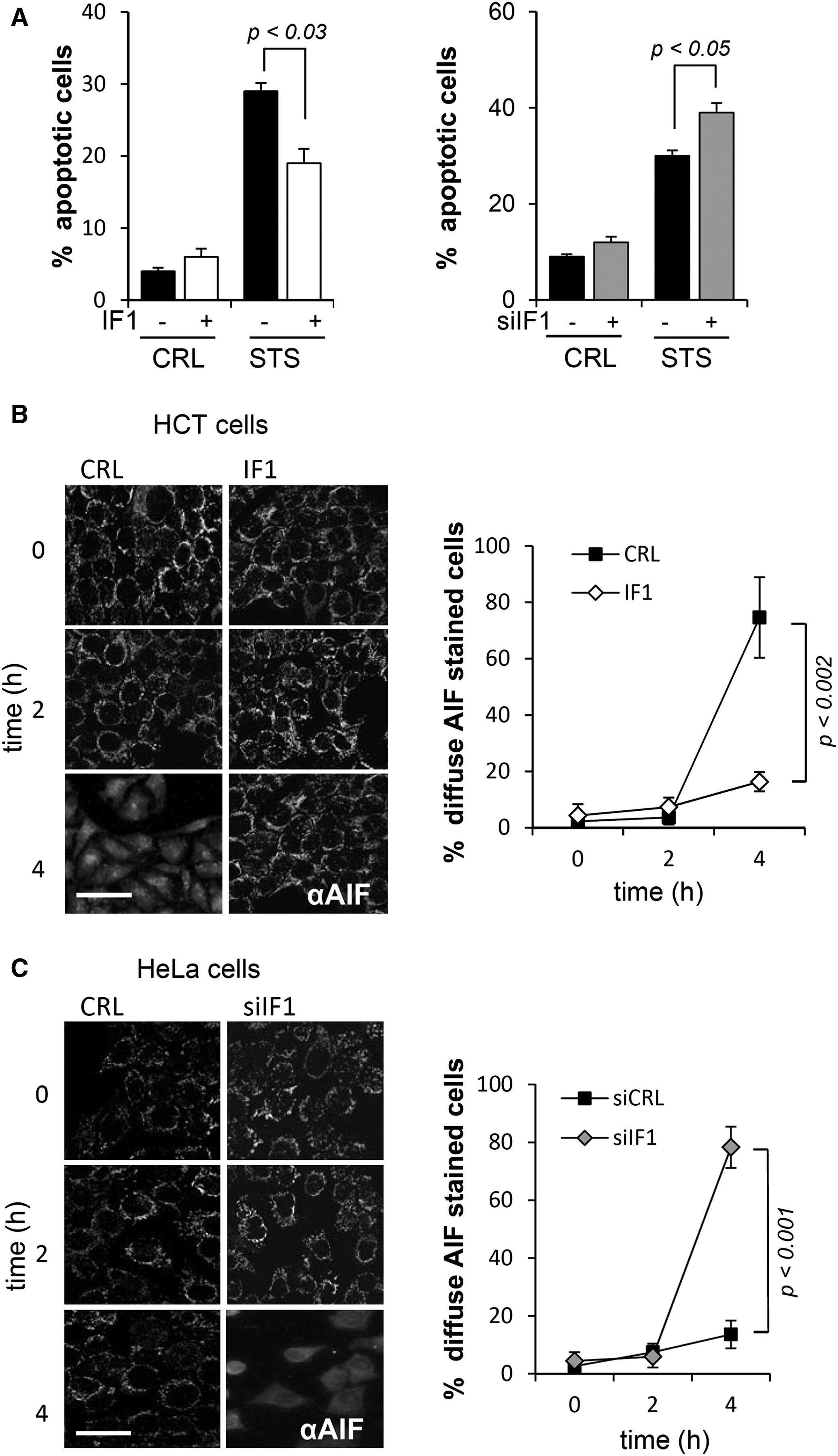 The Mitochondrial Atpase Inhibitory Factor 1 Triggers A Ros Mediated Retrograde Prosurvival And
