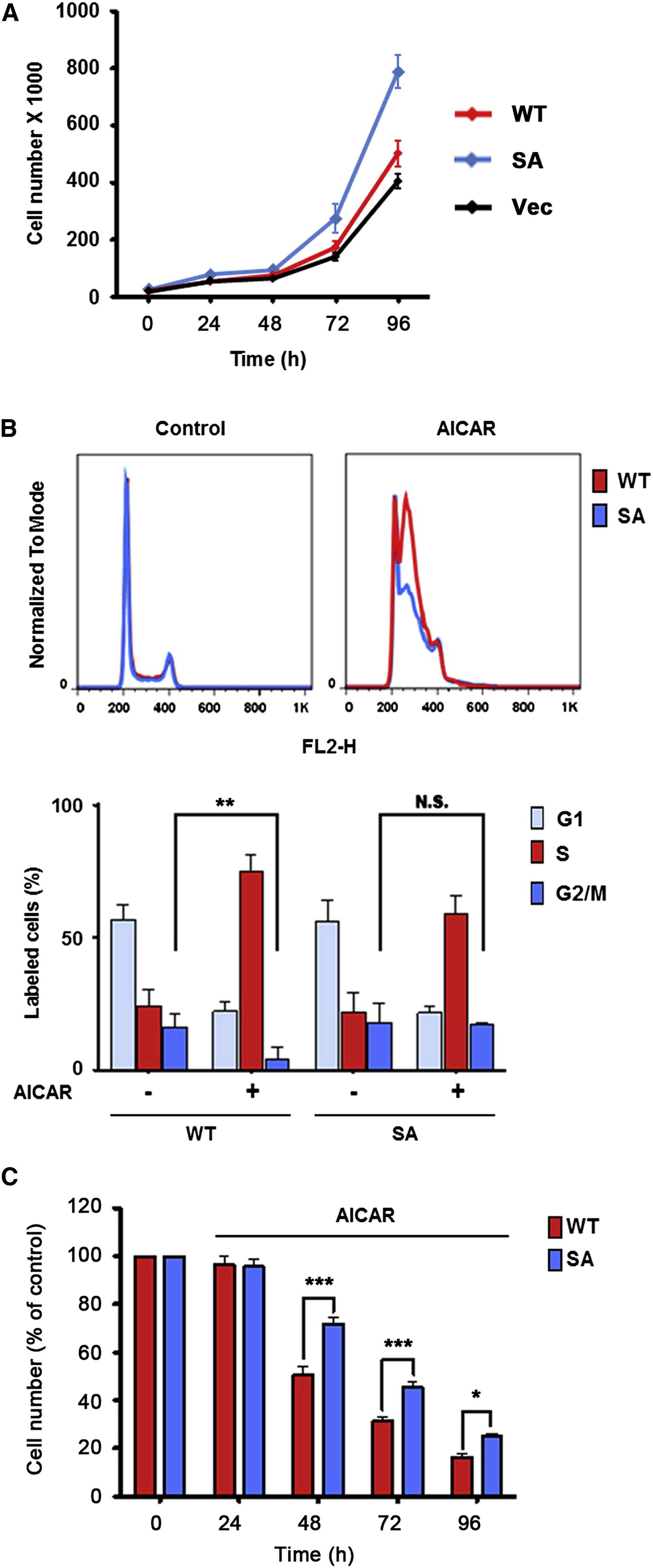 Phosphorylation Of Braf By Ampk Impairs Braf Ksr1 Association And Cell Proliferation Molecular Cell