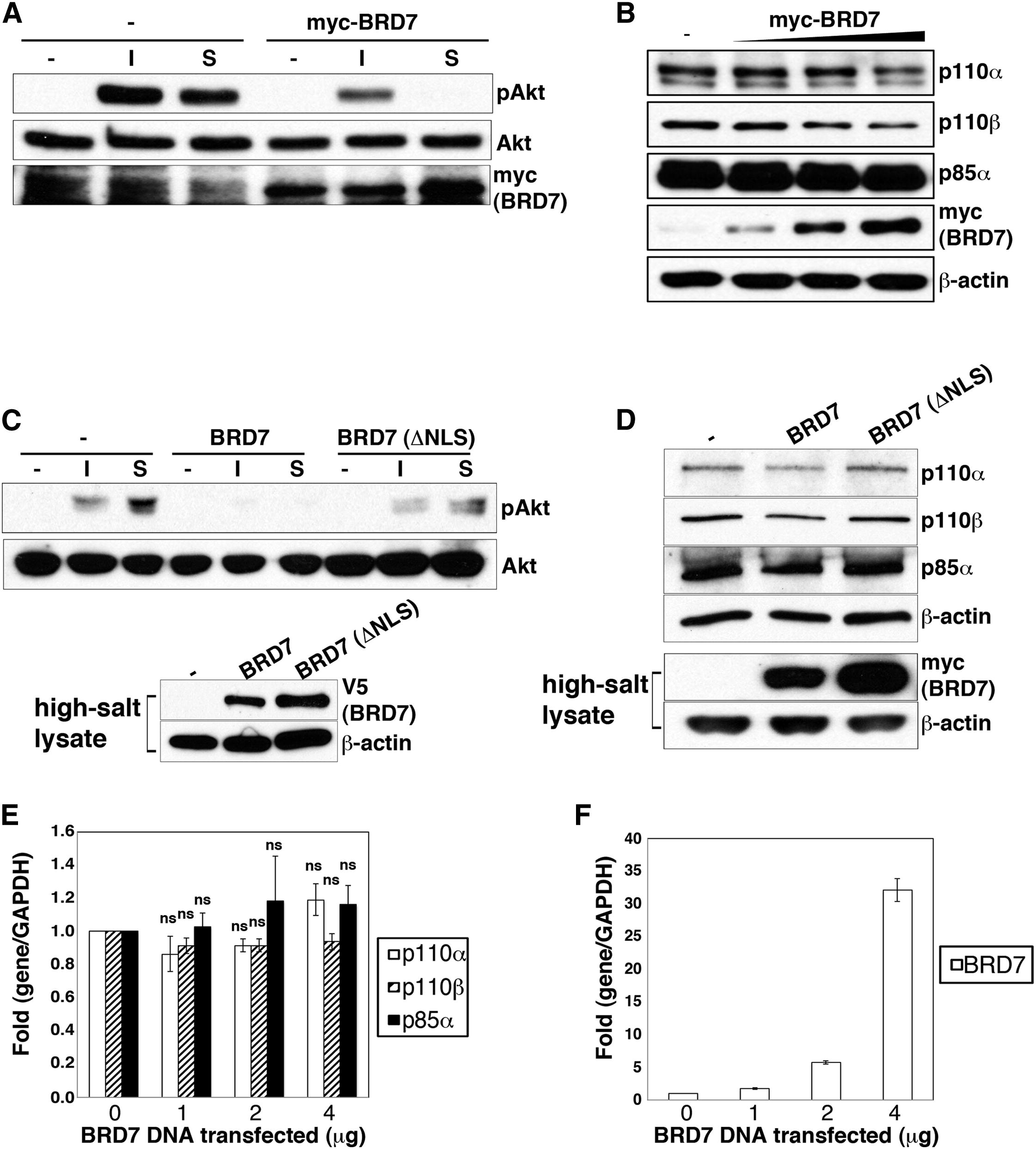 Brd7 A Tumor Suppressor Interacts With P85 And Regulates Pi3k Activity Molecular Cell