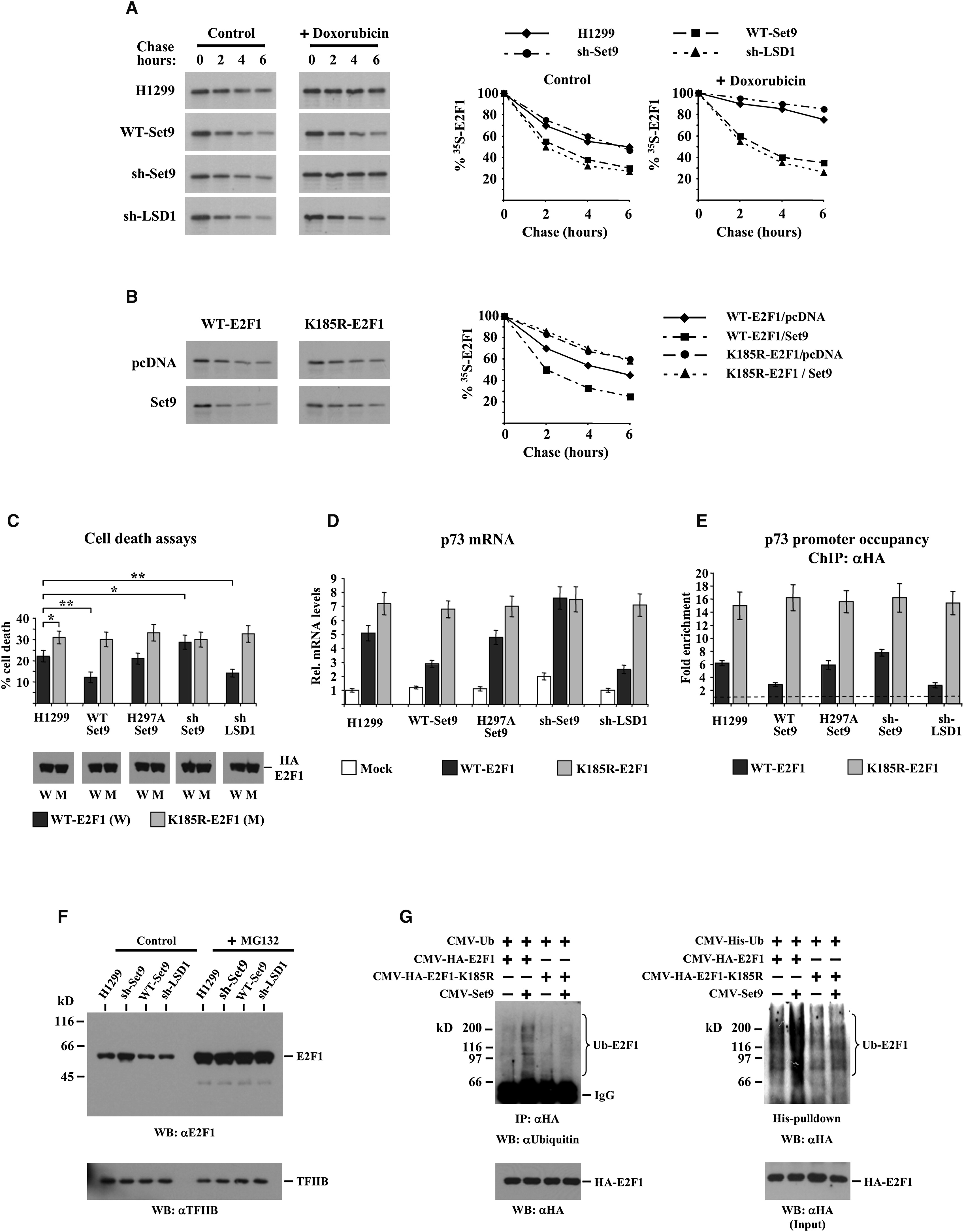 Lysine Methylation Regulates E2f1 Induced Cell Molecular Cell