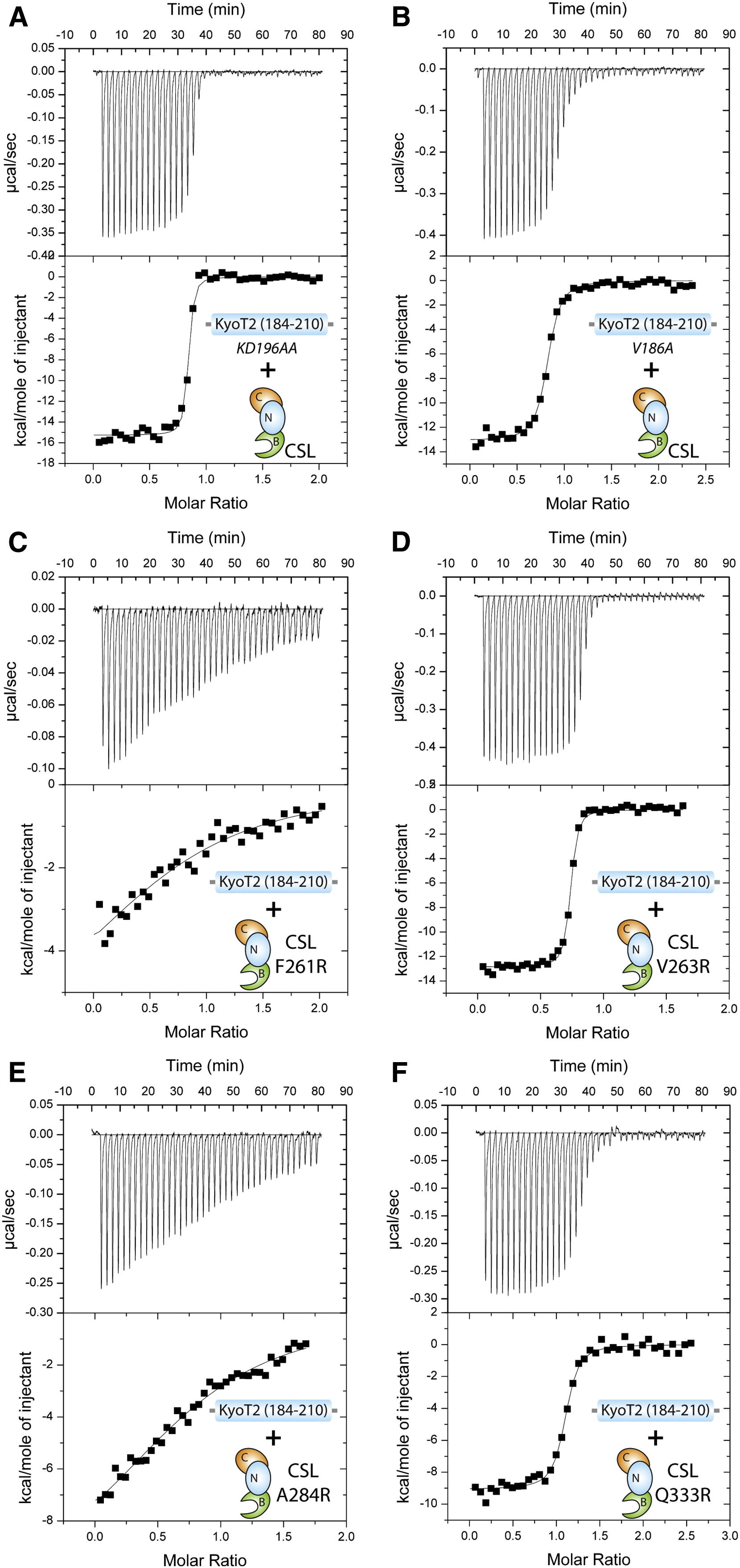 Structure And Function Of The Csl Kyot2 Corepressor Complex A Negative Regulator Of Notch