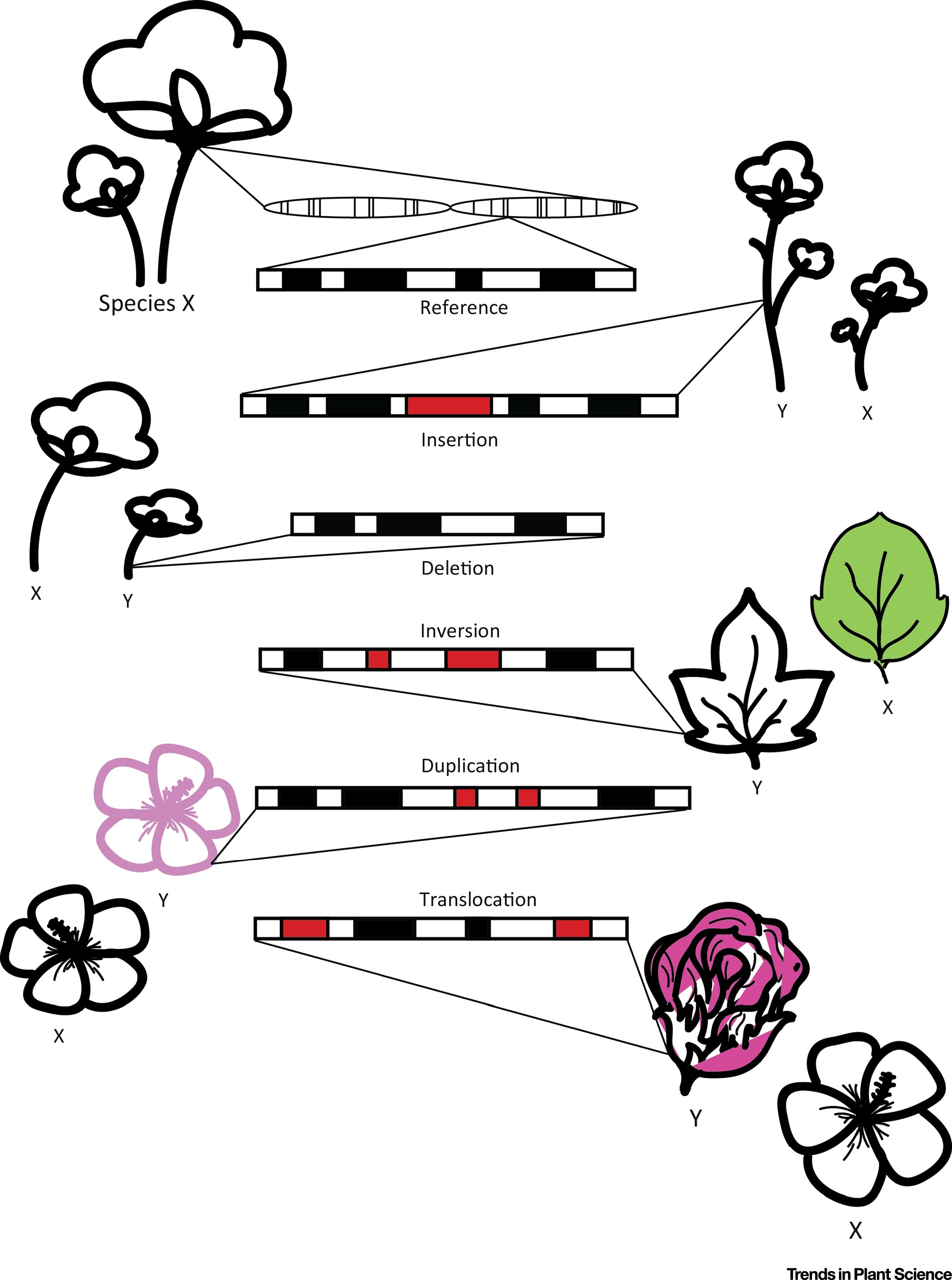 Genome Mapping In Plant Comparative Genomics Trends In