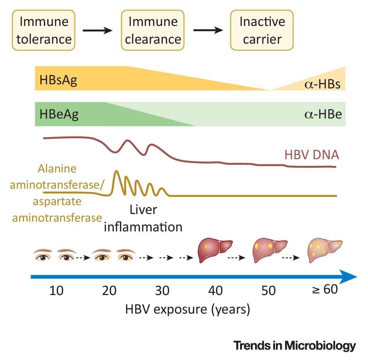 Hepatitis B Virus Trends In Microbiology