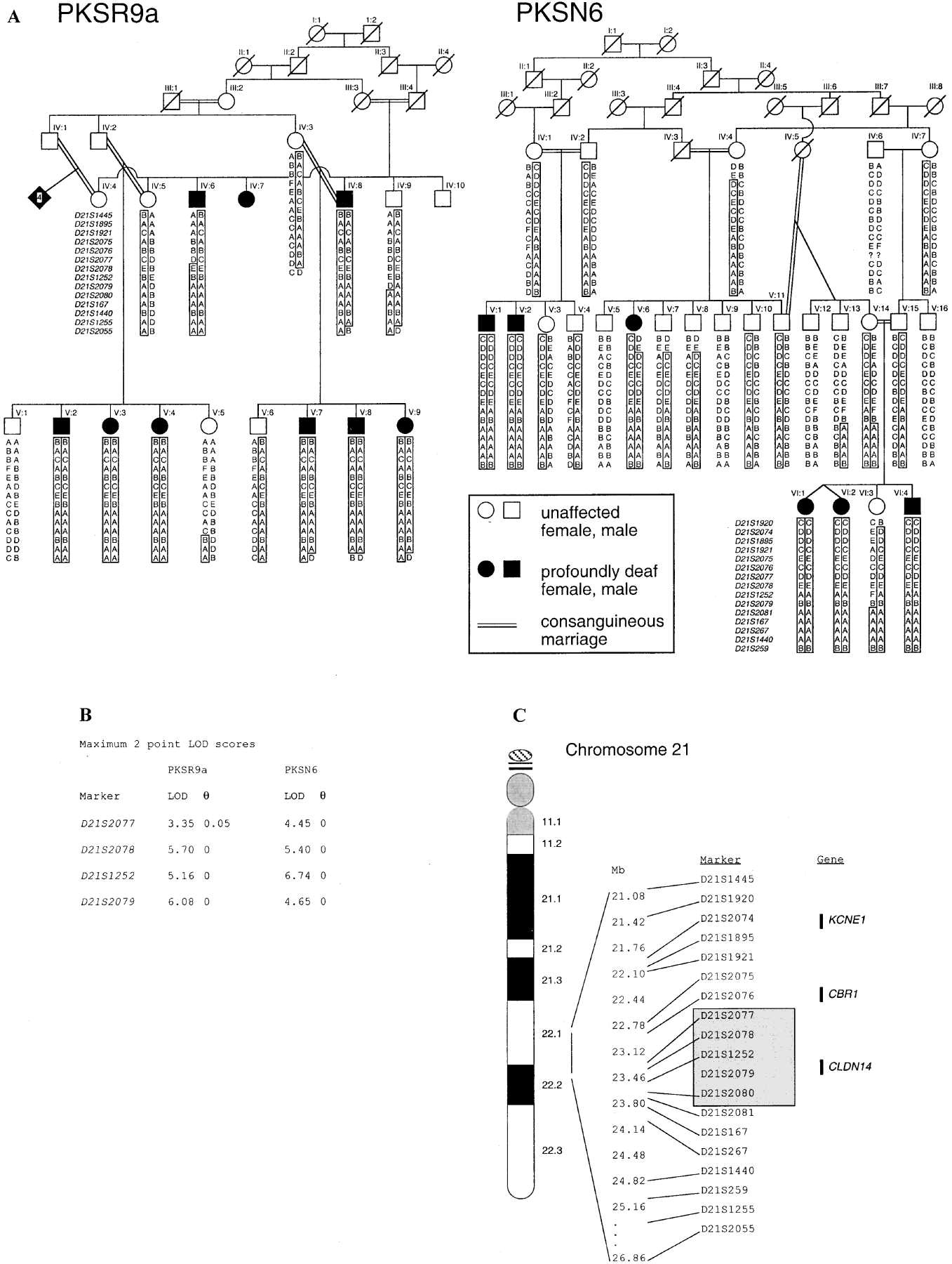 Mutations In The Gene Encoding Tight Junction Claudin 14