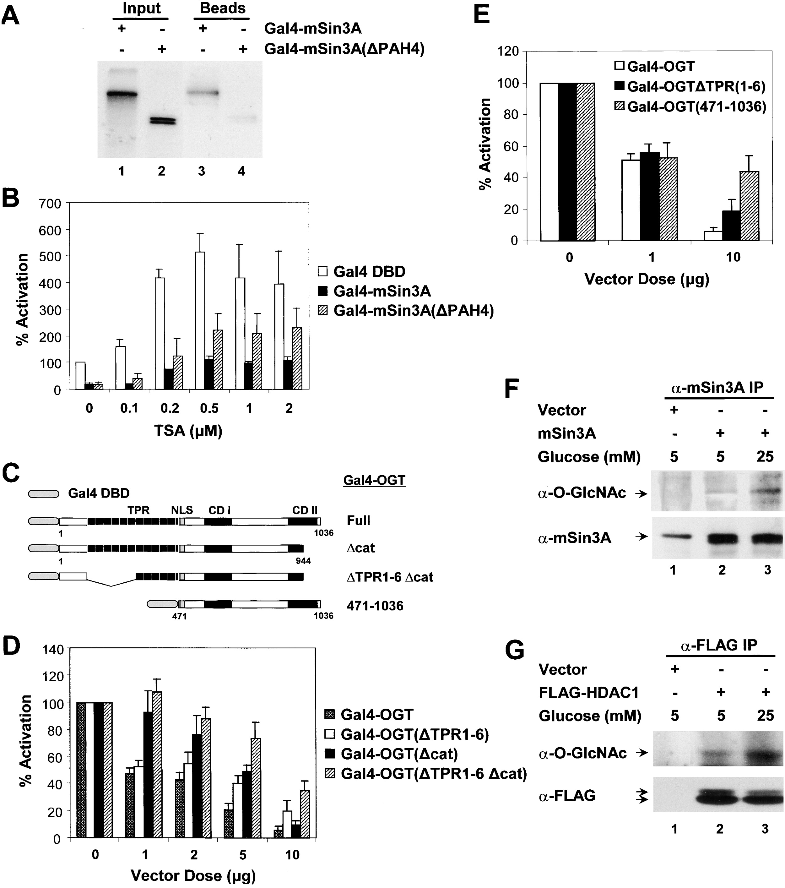 Recruitment Of O Glcnac Transferase To Promoters By Corepressor Msin3a Cell
