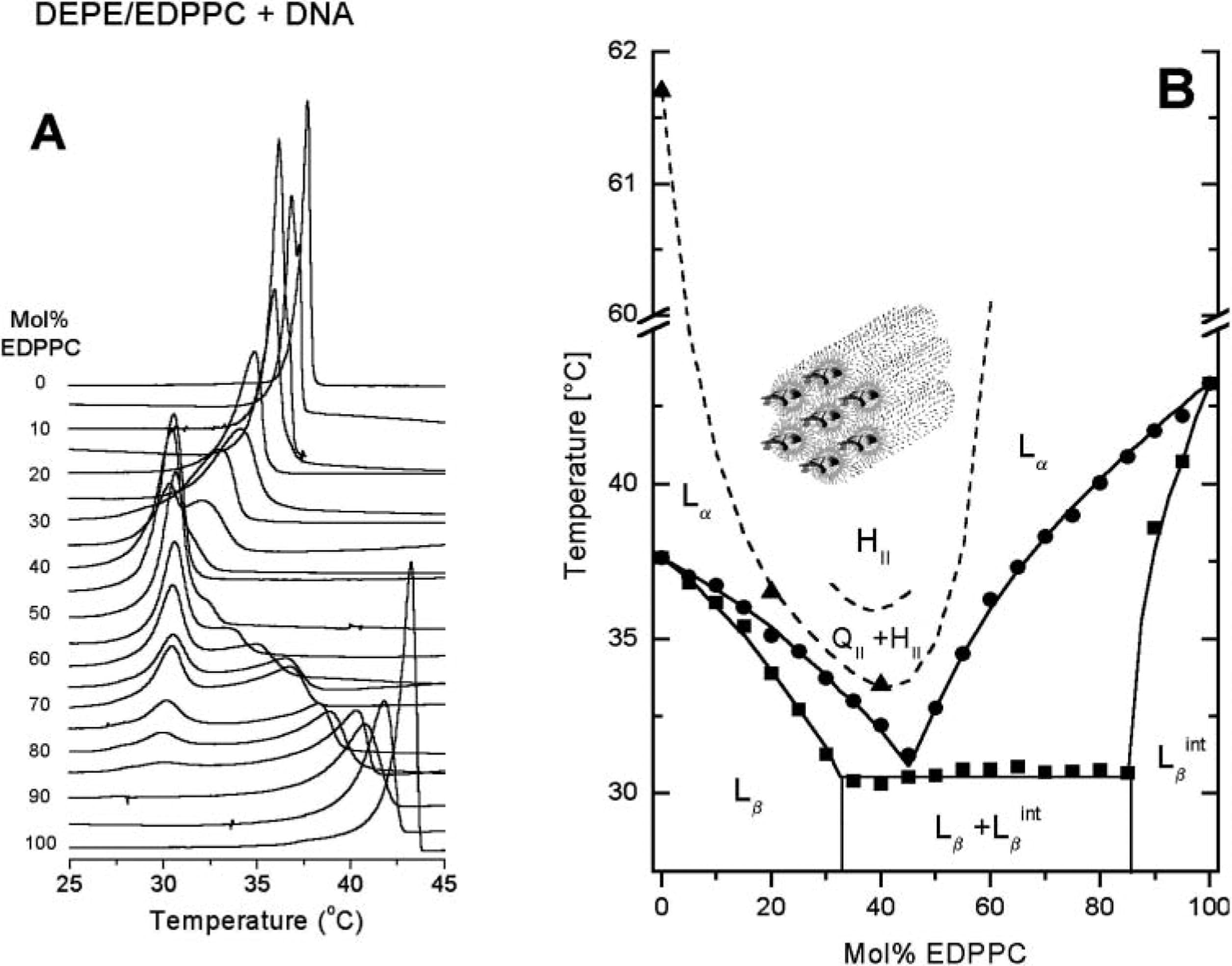 Mixtures Of Cationic Lipid O Ethylphosphatidylcholine With Membrane Lipids And Dna Phase