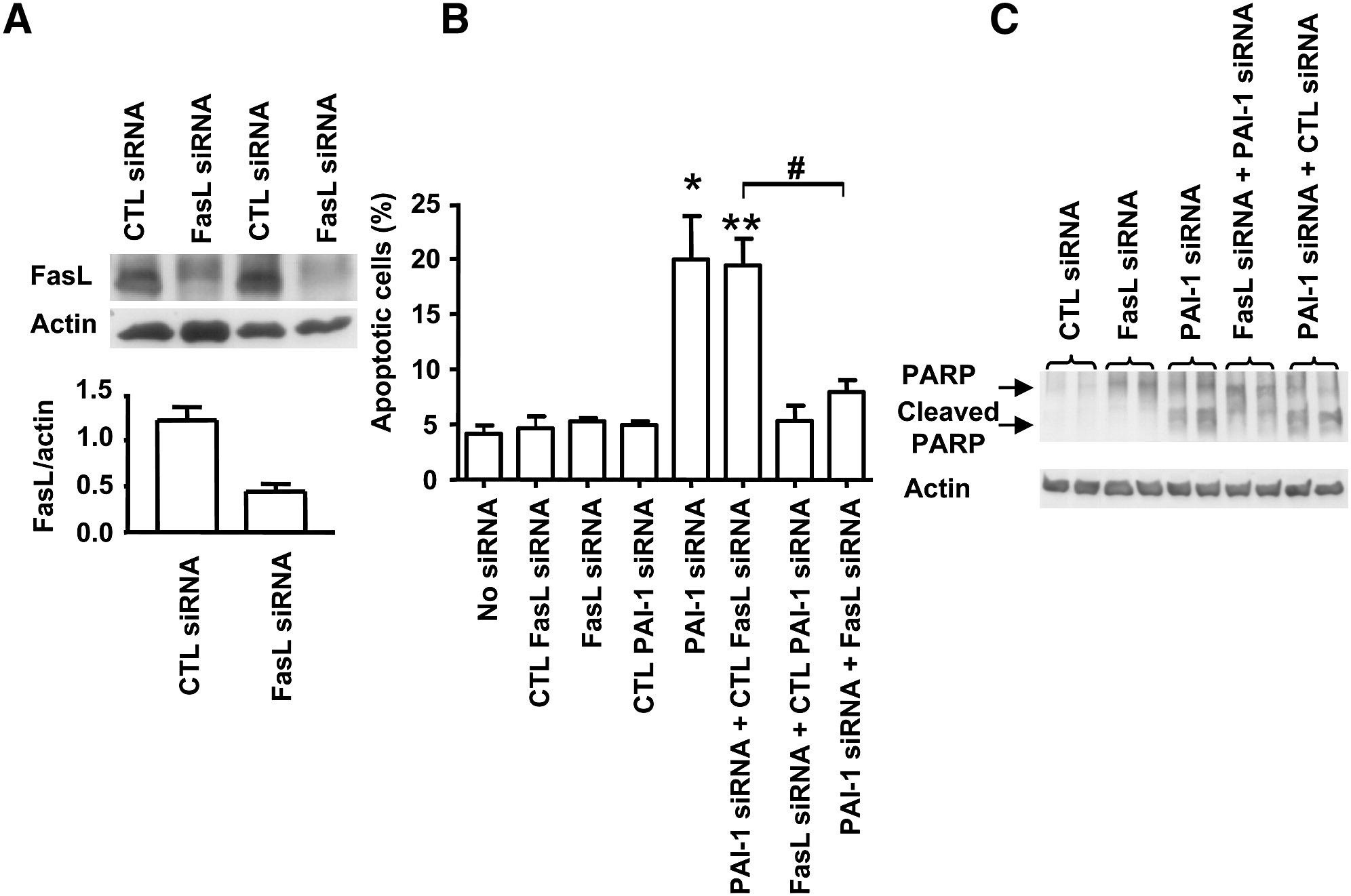 Plasminogen Activator Inhibitor 1 Protects Endothelial Cells From Fasl Mediated Apoptosis