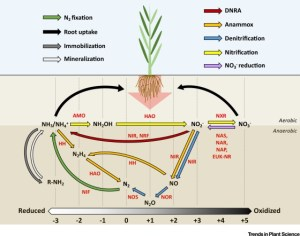 How Plant Root Exudates Shape the Nitrogen Cycle: Trends in Plant Science