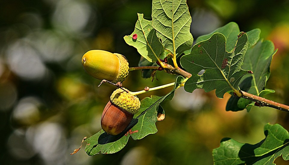 Acorn growing image like Investments