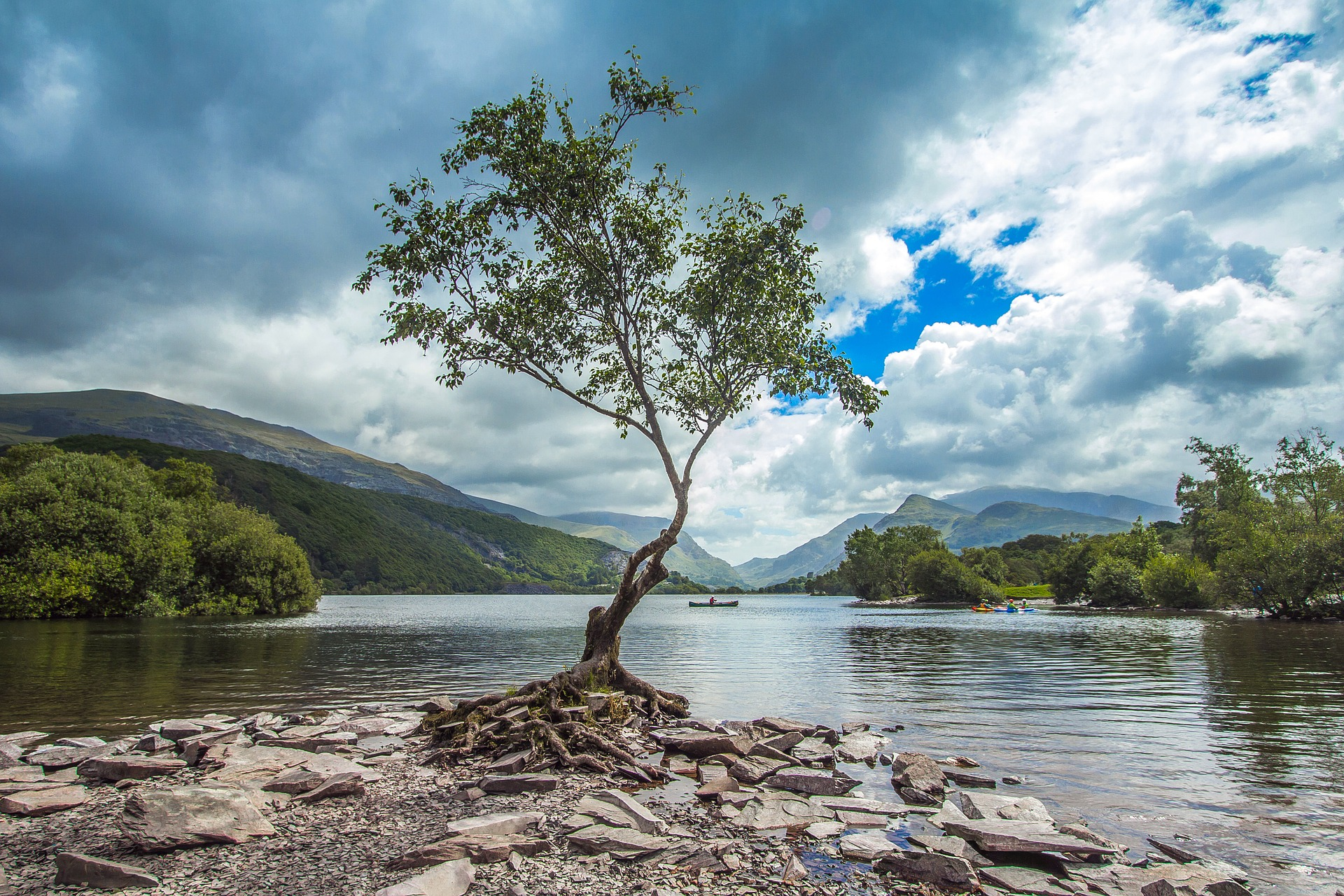 Tree growing by river