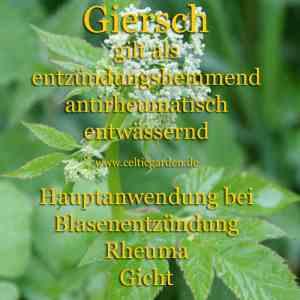 Giersch Steckbrief