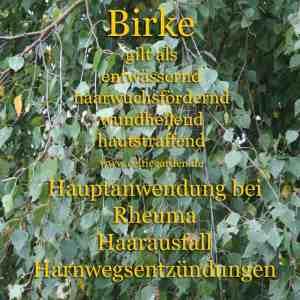 (Birken - Steckbrief)