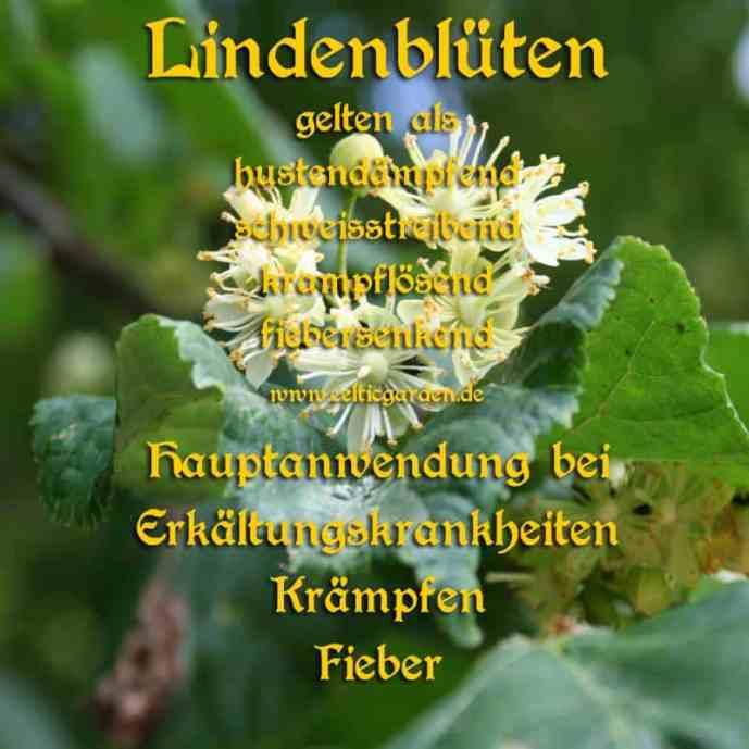 heilbaum_lindekl