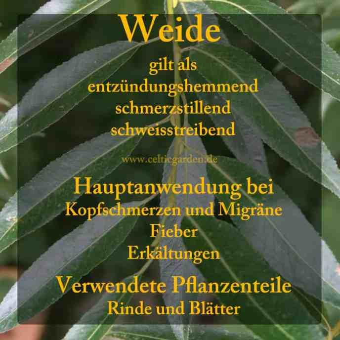 heilbaum_weide