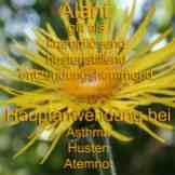 Steckbrief Alant