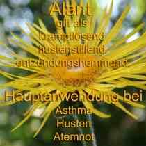 heilpflanze_alant