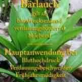 Heilkräuter-Steckbrief Bärlauch