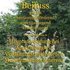 BeifussSteckbrief ~ Heilkräuterlexikon